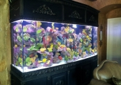 Residential Aquariums