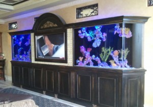 fish tank cleaning orlando - homes and businesses