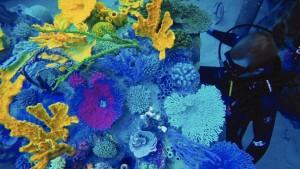 os-discovery-cove-reefsb-jpg-20160408