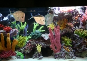 Custom Coral