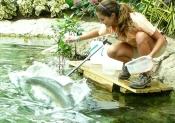 Live Animal Waterways