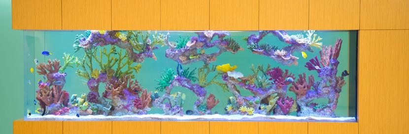custom aquarium builder orlando