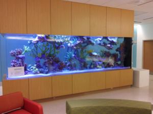 custom aquariums orlando